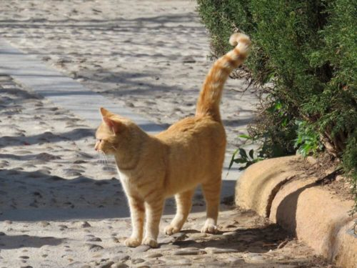 スペイン ロンダ 猫